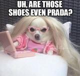 Are those prada shoes memes