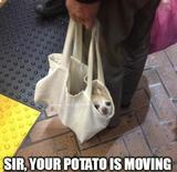 Potato is moving memes