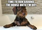 Run around the house memes