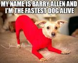 The fastest dog alive memes