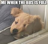 The bus is full memes